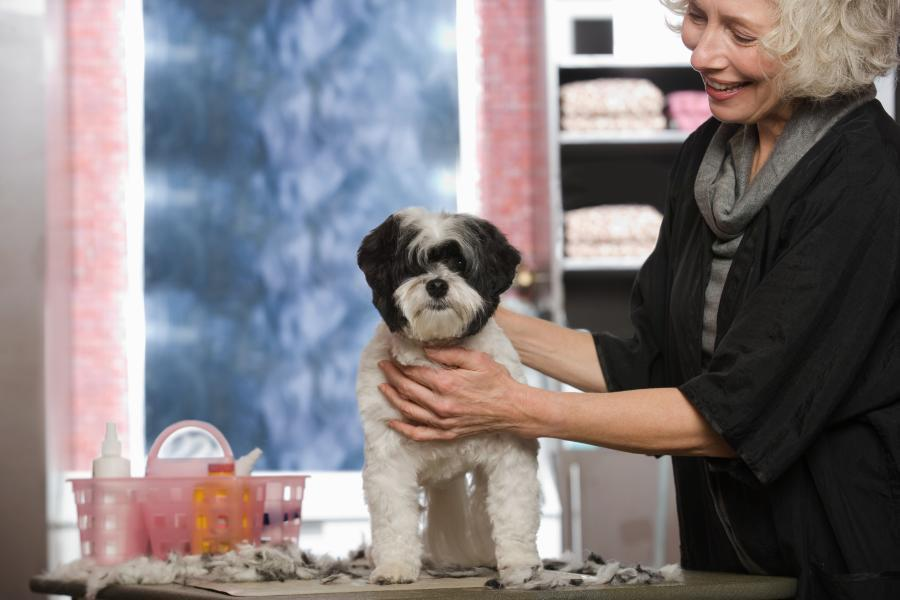 Easily Groom your Dog's Ears, with these 6 Simple Steps 1