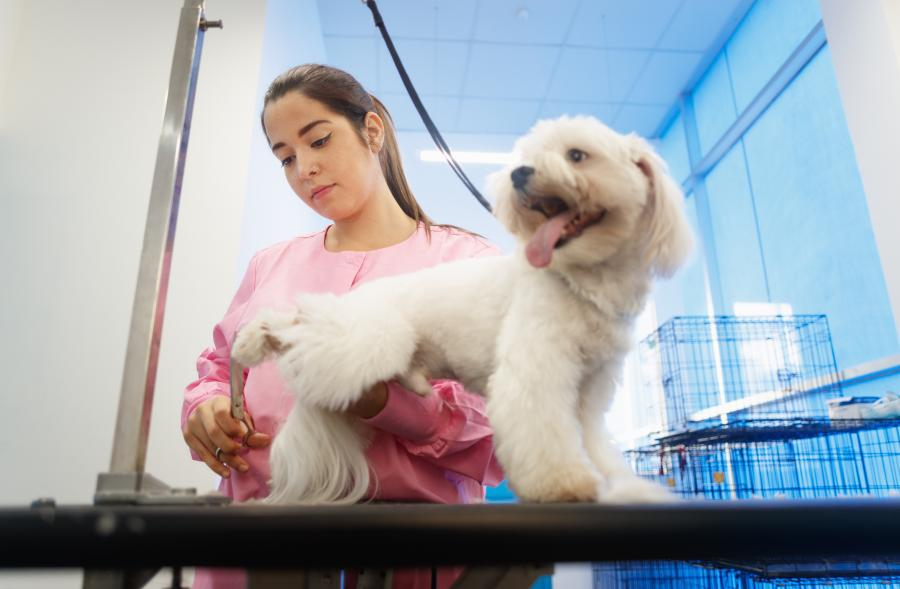 What does it Cost to Groom Your Dog? We Checked for You (US, Aus, and GB) 1