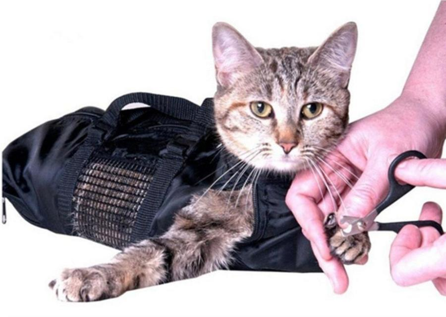 What to Consider When Choosing a Cat Grooming Bag 1