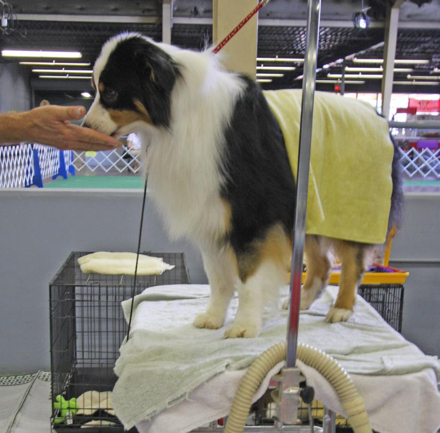 What to Consider When Choosing a Dog Grooming Table 1